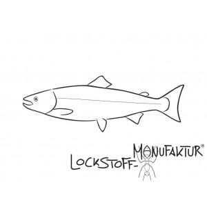 Atlantischer Lachs dient als Quelle dieses hochwertigen Fischöles, das für das Angeln auf Karpfen sehr gut geeignet ist.