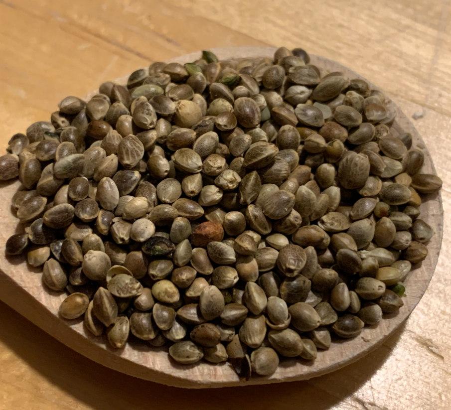 Konopie - klasyk wśród surowych wędkarzy.  Małe nasiona mają również bardzo atrakcyjny wpływ na karpia.