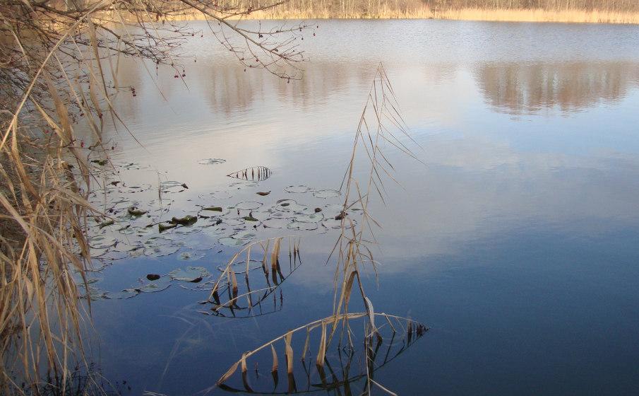 Auch in unbekannten Gewässern kann man in kurzer Zeit Karpfen fangen...