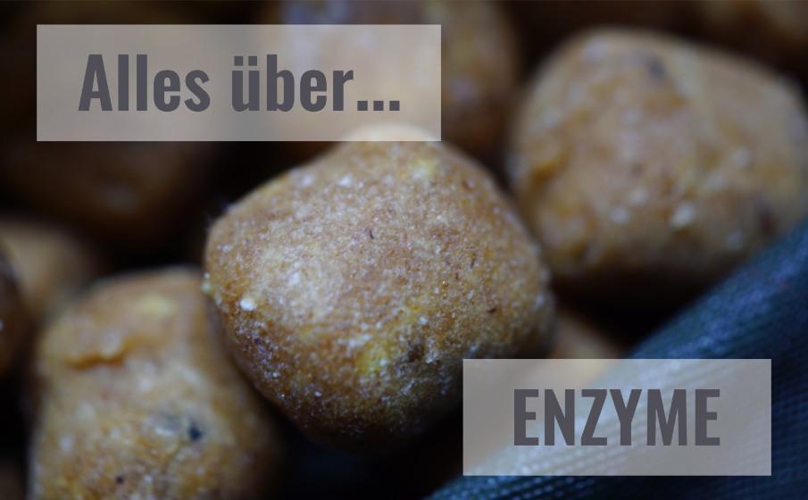 Hintergründe, Fakten und mehr über Enzyme beim Karpfenangeln findest Du in diesem Beitrag!
